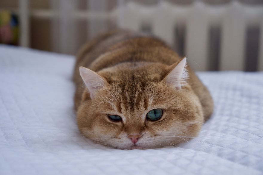 Cute Animal Tab Cute Animal Pictures On Every Tab - Hosico the cat is pretty much the real life puss in boots