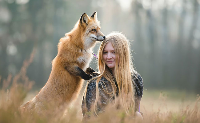 fox-friend