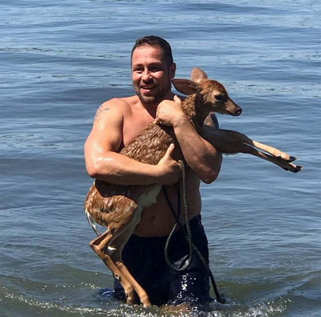 dog-saves-drowning-baby-deer-storm-1