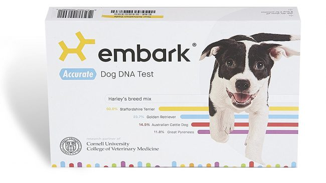 Embark Animal Pillow : Cute Animal Tab Cute Animal Pictures on every Tab